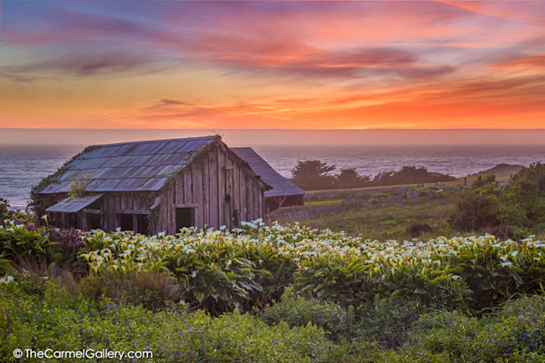 Sea Ranch photography