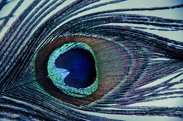 Eye of the Peacock Limited Edition Signed Abstract Photograph by Melissa Fague