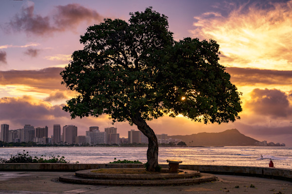 Hawaii Photography | Tree of Kakaako by Peter Tang