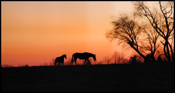 November Sunset IMG 4829