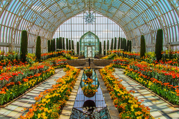 Beautiful Flowers Conservatory Photograph for Sale as Fine Art
