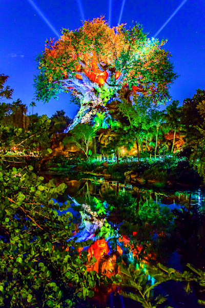 Tree of Life at Night Photograph for Sale as Fine Art