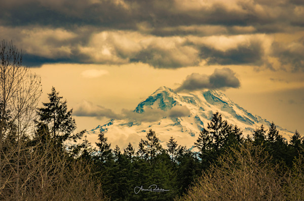 Mt Rainier Lacey