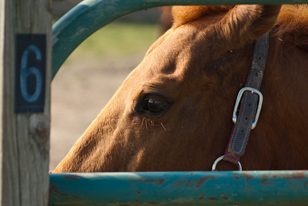 Paddock 6 Limited Edition Signed Horse Photograph by Melissa Fague