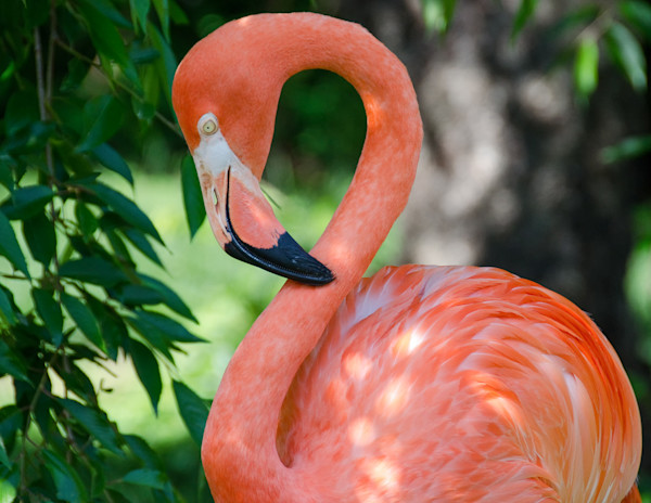 Pinky Limited Edition Signed Wildlife Photograph by Melissa Fague