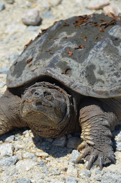 Smiling Turtle Limited Edition Signed Wildlife Photograph by Melissa Fague