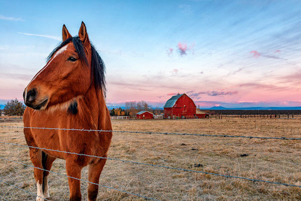 Horses w-Red Barn 2 (161366ANND8) Photograph for Sale as Commercial Product Only