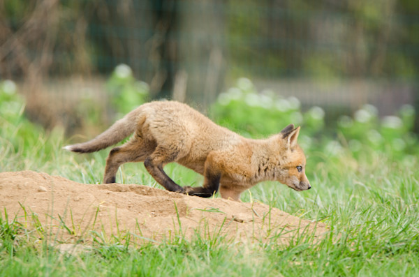 On The Move Limited Edition Signed Fine Art Wildlife Photography Print by Melissa Fague