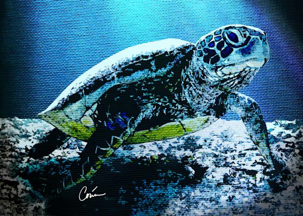 Tropical Sea Turtle in the blue ocean