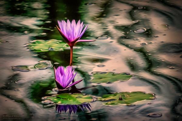 Shades Of Purple, d'Ellis Photographic Art photographs, Elsa