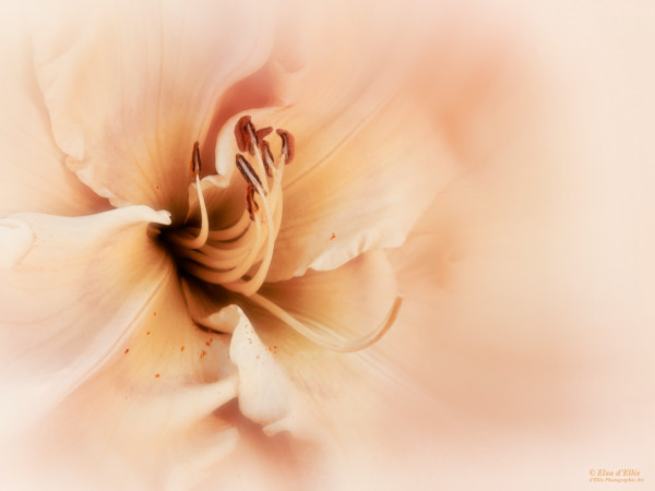 Tender Glow, d'Ellis Photographic Art photographs, Elsa