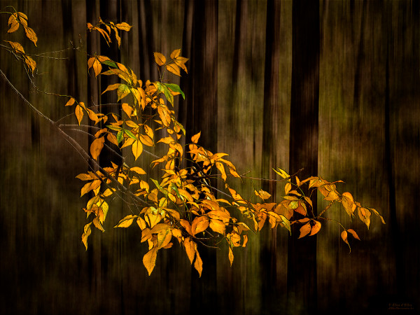 Fine art photographs of Leaves | d'Ellis PhotographicArt, Bill & Elsa