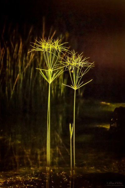 Night Sentinels, d'Ellis Photographic Art photographs, Elsa