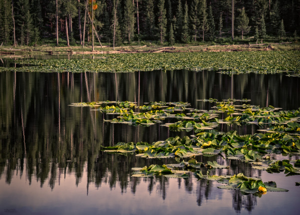 Photo, Jenny Lake Reflections, d'Ellis Photographic Art photographs, Elsa