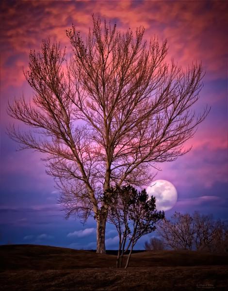 Photo of Mystic Moon, d'Ellis Photographic Art photographs, Elsa