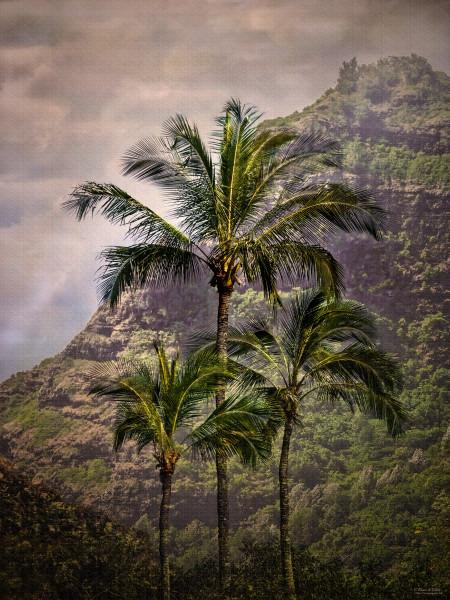 Tropical Icons, d'Ellis Photographic Art photographs, Elsa
