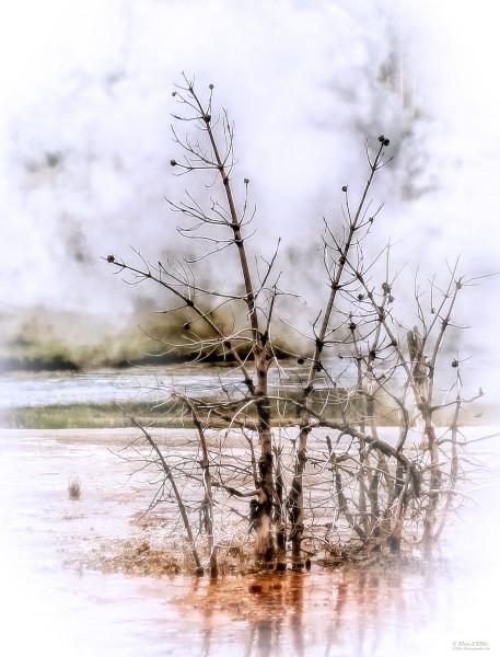 Photo of Frosty Morning, d'Ellis Photographic Art photographs, Elsa