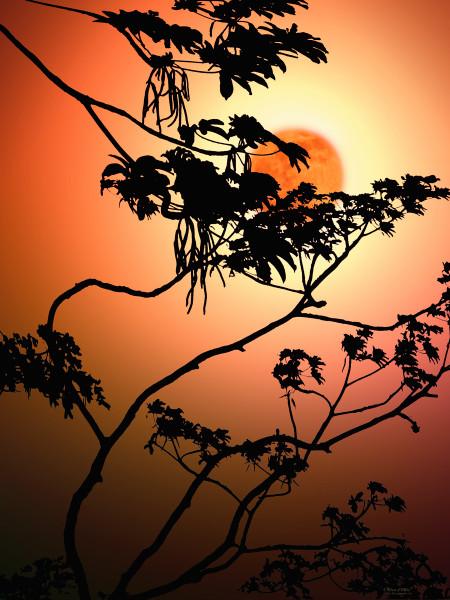 Photo of Tropical Moon, d'Ellis Photographic Art photographs, Elsa