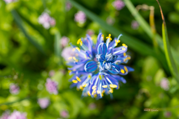 Wildflower Top Down (171654NWND8-P) Photograph for Sale as Fine Art Print