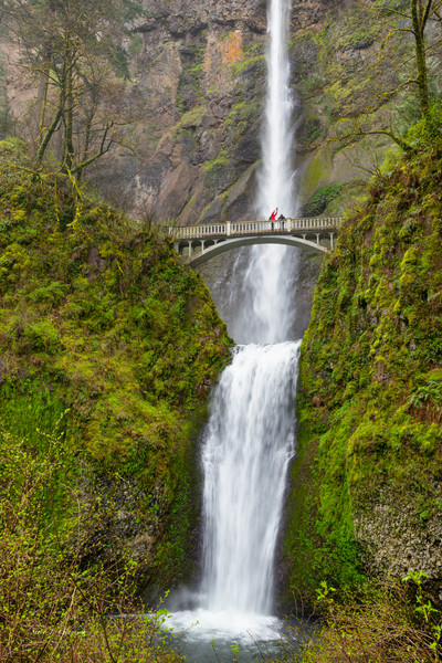 Multnomah Falls Spring (171660LNND8) Oregon Waterfall Photograph for Sale as Fine Art Print