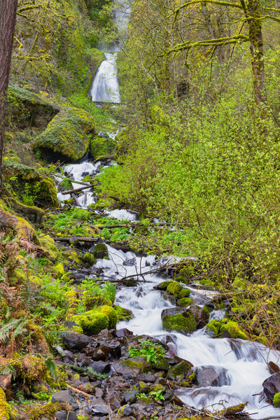 Wahkeena Waterfall Spring (171659LNND8) Oregon Waterfall Photograph for Sale as Fine Art Print