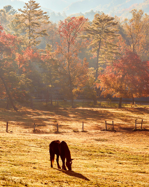 Dawn at Cades Cove Stables