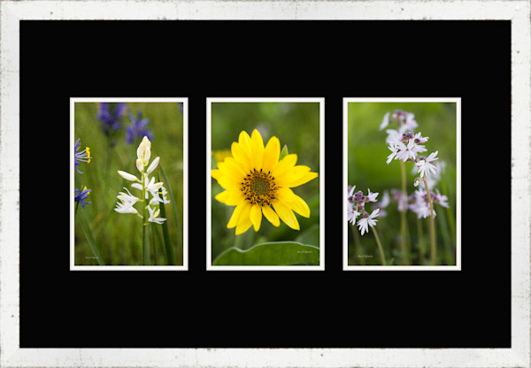Three 8x12 Paper Color Print 24x36 Whitewash Barn Wood Frame