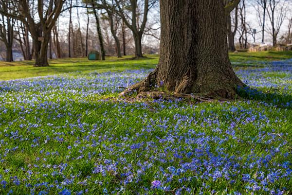 Spring Blue blanket