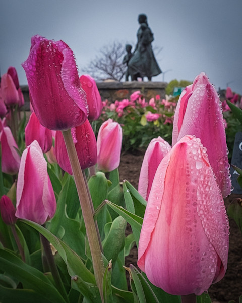 Fisherman's Wives Memorial Pink Tulips