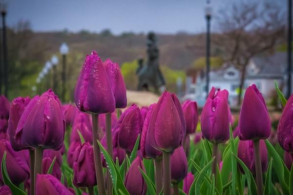 Fisherman's Wives Memorial Purple Tulips