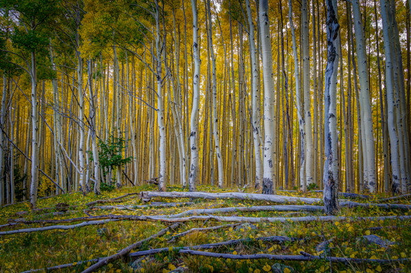 Autumn, Aspens, Landscape, Photography, Sangre de Christo mountains, Santa Fe, Fall, New Mexico, Southwest