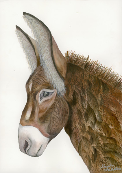 """Jacquie"" is a distinguished donkey original painting for sale by Gayela Chapman-McKelvie, Gayela's Premiere Watercolors