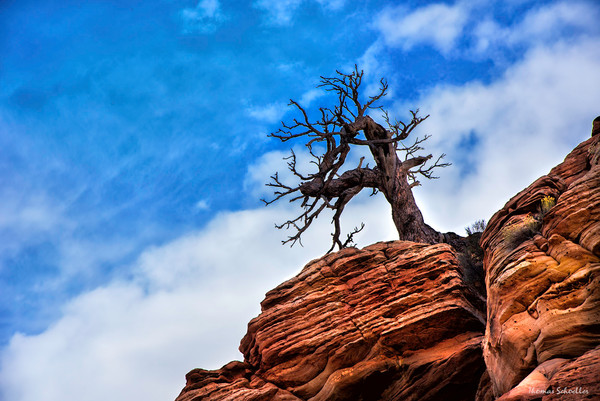Alone at the Top is an amazing scenic landscape fine art print from Zion National Park, Utah