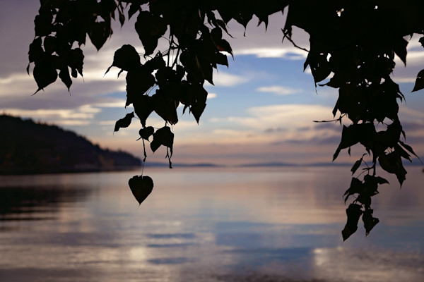 Photograph of leaves backlit on a cloudy day at Flathead Lake in Montana