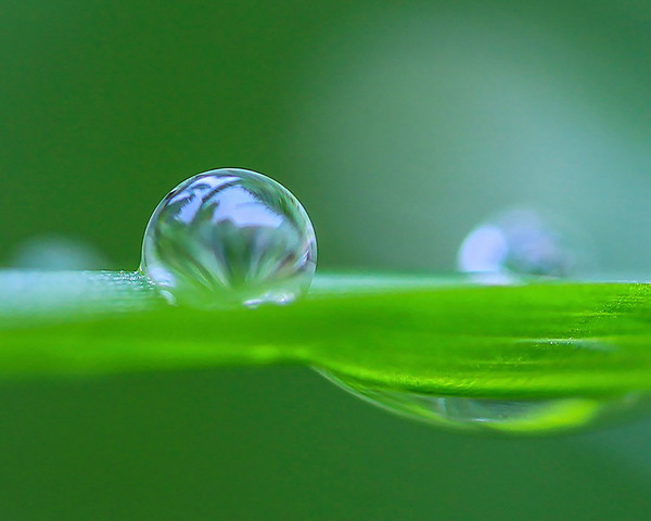 Raindrop on Grassblade