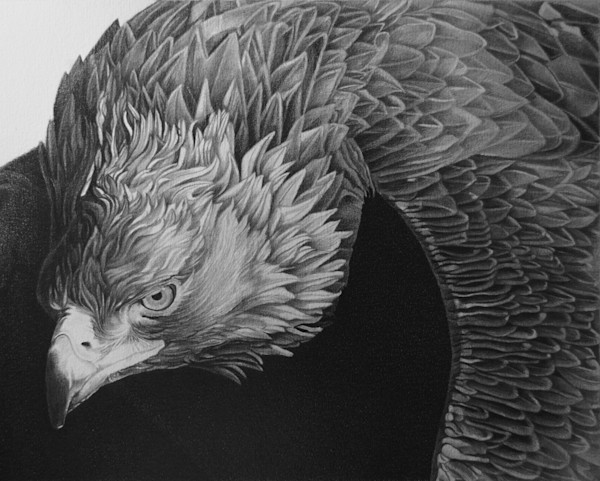 Golden Eagle by Todd Michael | SavvyArt Market art print
