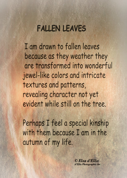 Fallen Leaves Statement, d'Ellis Photographic Art photographs, Elsa