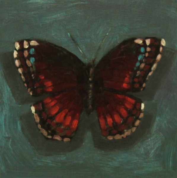 Shop for original paintings like Butterfly Color Studies, #9 oil on panel by Jeremy Couch at Matt McLeod Fine Art Gallery.