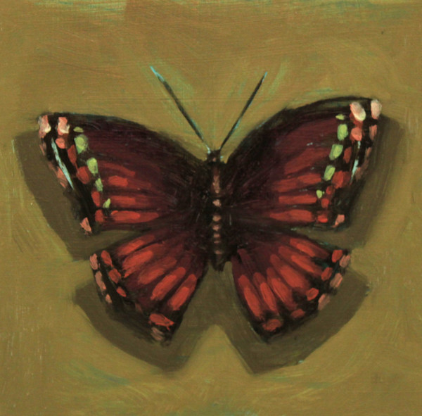 Shop for original paintings like Butterfly Color Studies, #7 oil on panel by Jeremy Couch at Matt McLeod Fine Art Gallery.