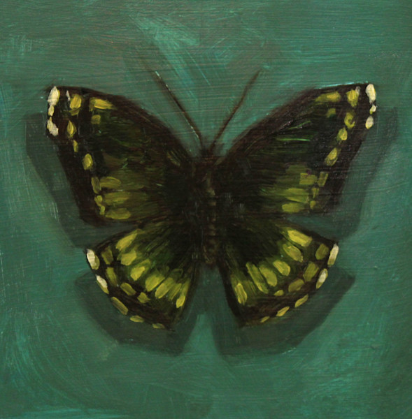 Shop for original paintings like Butterfly Color Studies, #2 oil on panel by Jeremy Couch at Matt McLeod Fine Art Gallery.