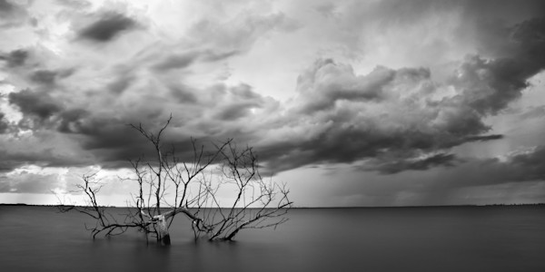 The Old Bay Tree - Florida Landscape Photograph by Andrew Vernon