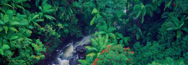 Hamakua Coast, Island of Hawaii, Hawaii, USA