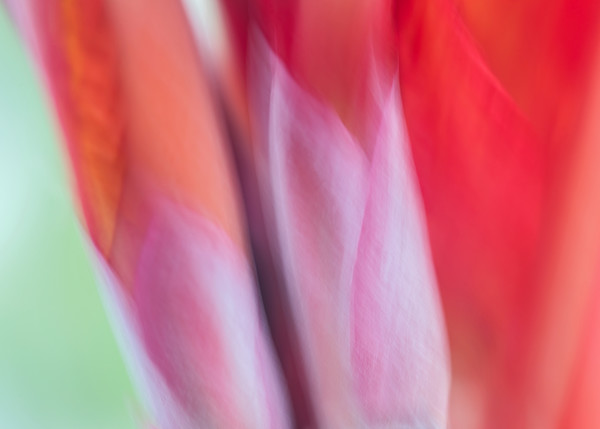 """""""World of Color #8"""" Large Fine Art Macro Bird of Paradise Floral Photograph"""