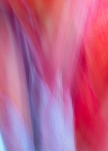 """""""World of Color #15"""" Abstract Tropical Floral Fine Art Photograph"""