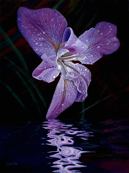 Water Iris Reflection