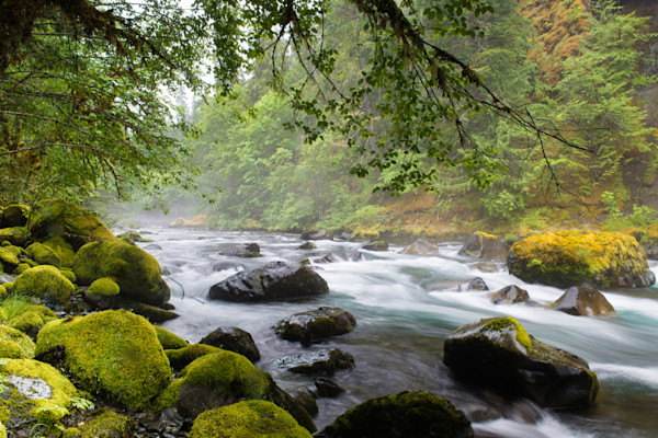 Middle McKenzie River Photo for sale by Barb Gonzalez Photography