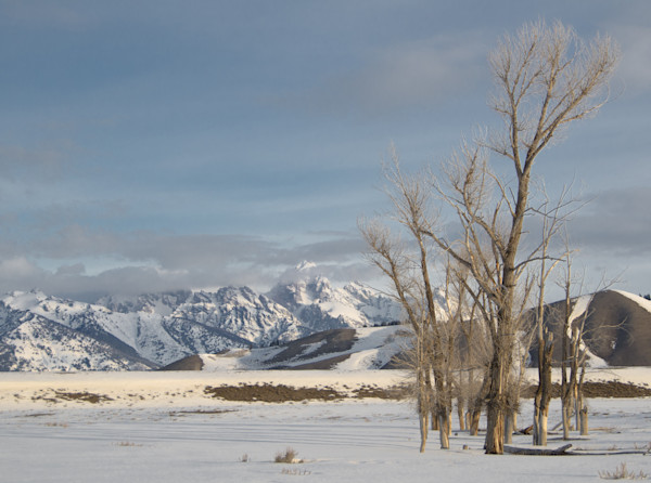 Peaceful Tetons Mountains and bare trees art photo- in canvas, metal and archival print