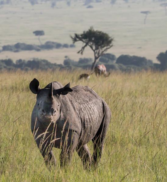African Black Rhino Photo Wall Art