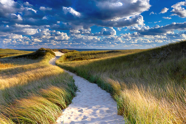"""Philbin Beach Path"" Martha's Vineyard coastal beach art"
