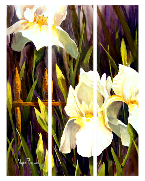 White Iris Triptych
